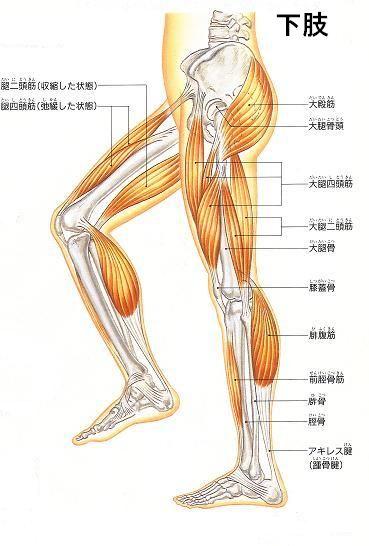 「膝」の画像検索結果